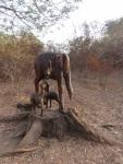 Éléphants sculptés dans un tronc d'arbre